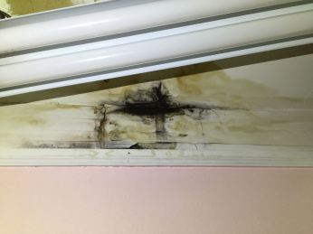Mold in Bathroom